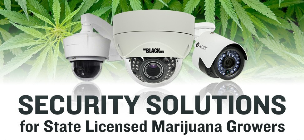 SECURITY SOLUTIONS for State Licensed Marijuana Growers