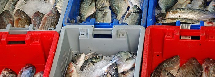 Stop 'Fishy' Fishing! How Surveillance is Stopping Black Market Fishing